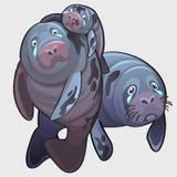 Famille de pleurer naval de phoque, de maman, de papa et de bébé illustration libre de droits