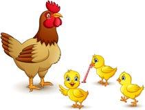Famille de poulet sur le fond blanc illustration de vecteur