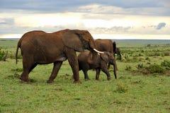 Famille de prairie et d'éléphant Photographie stock libre de droits