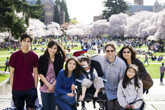 Famille de sept devant des arbres de fleur de cerise Images stock