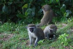 Famille de singe à côté des arbres Photo libre de droits