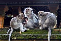 Famille de singe Photographie stock