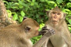 Famille de singe Photo libre de droits