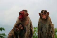 Famille de singe Image stock