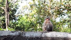 Famille de singe dans la forêt banque de vidéos