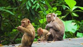 Famille de singe dans la forêt tropicale banque de vidéos