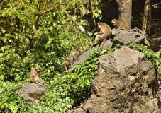 Famille de singe en Thaïlande Image libre de droits