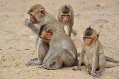 Famille de singe en Thaïlande Photo libre de droits