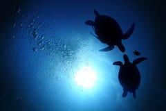 Famille de tortue de mer Images libres de droits