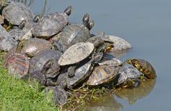 Famille de tortues de l'eau Image libre de droits