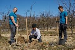 Famille de trois générations plantant un arbre ensemble Photographie stock
