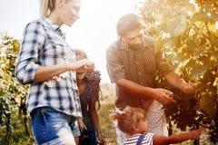 Famille de Winemaker ensemble dans le vignoble Image stock