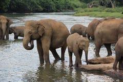 Famille des éléphants Photo stock