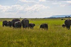 Famille des éléphants au Kenya Afrique Image stock