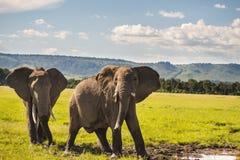 Famille des éléphants au Kenya Afrique Photos stock