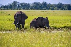 Famille des éléphants au Kenya Afrique Photos libres de droits
