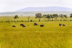 Famille des éléphants au Kenya Afrique Photo stock