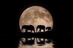 Famille des éléphants en silhouette de clair de lune images libres de droits