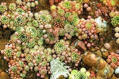 Famille des cactus Image stock