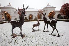 Famille des cerfs communs dans la neige Photos stock