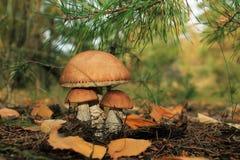 Famille des champignons Photographie stock libre de droits