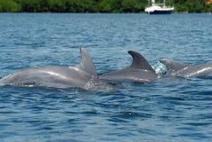 Famille des dauphins Image libre de droits