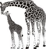 Famille des girafes Photo stock