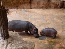 Famille des hippopotames Image libre de droits