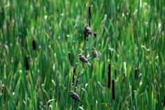 Famille des oiseaux avec un fond naturel vert Photographie stock