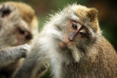 Famille des singes Photo stock