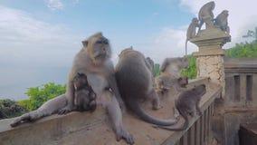 Famille des singes sauvages se reposant ensemble sur les rampes avec la mer et les arbres derrière Grand macaque de mère dans le  banque de vidéos