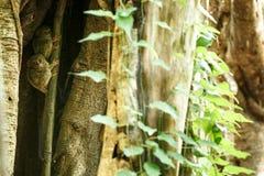 Famille des tarsiers spectraux, spectre de Tarsius, portrait des mammif?res nocturnes end?miques rares, petit primat mignon dans  photos libres de droits