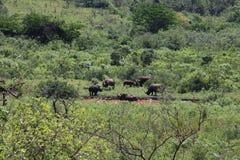Famille du rhinocéros blanc photographie stock libre de droits