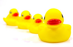 Famille en caoutchouc de canard images stock