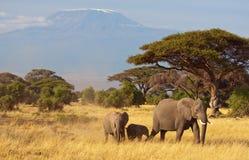Famille et Kilimanjaro d'éléphant Photographie stock
