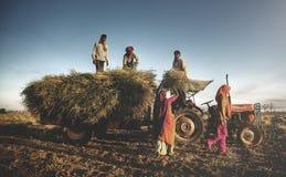 Famille Faeming d'Inde moissonnant des cultures moissonnant le concept photographie stock libre de droits