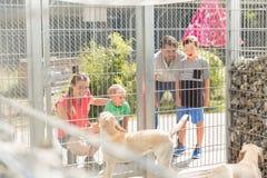 Famille finissant par conna?tre des chiens dans le refuge pour animaux photos stock