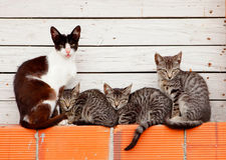 Famille gentille du repos de chats Photographie stock libre de droits
