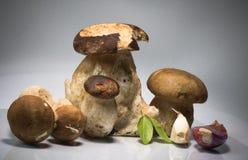 Famille heureuse saine fraîche du boletus de porcini de cèpe de champignons edulis avec l'herbe et l'ail de basilic photos stock