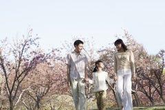 Famille heureuse tenant des mains et faisant un tour parmi les cerisiers en parc dans le printemps, Pékin Photographie stock