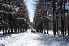 Famille marchant en parc de neige d'hiver Photographie stock libre de droits
