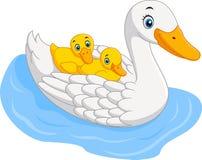 Famille mignonne de canard Photo stock