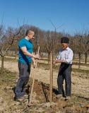 Famille plantant un arbre ensemble Image libre de droits
