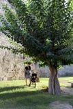 Famille près d'arbre dans le château Image stock