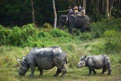 Famille sauvage du ` s de rhinocéros Images libres de droits
