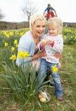 Famille sur la chasse à oeuf de pâques dans le domaine de jonquille Photo libre de droits