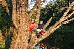 Famille sur le vieil arbre de rétablissement Image stock