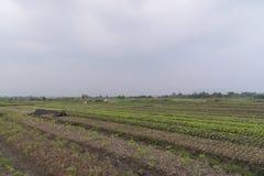 Famille vietnamienne, agriculture primitive Photographie stock