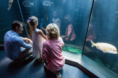 Familly looking at fish tank Royalty Free Stock Photo