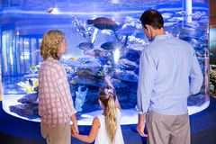 Familly looking at fish tank Stock Photography